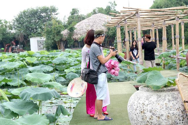 Từ khi sen bắt đầu ra hoa, mỗi ngày, có hàng trăm lượt khách, chủ yếu là các bạn trẻ đến tham quan, chụp ảnh