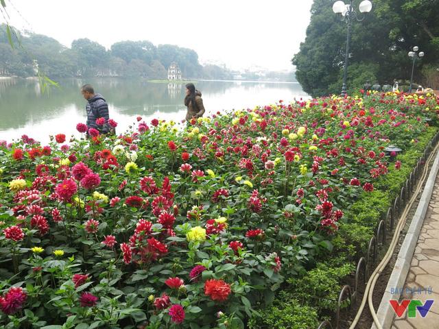 Trung tâm của thủ đô - khu vực hồ Gươm được trang trí đậm nét nhất bởi những chậu hoa nhỏ đủ sắc màu, xếp ngay ngắn dọc quanh Hồ.