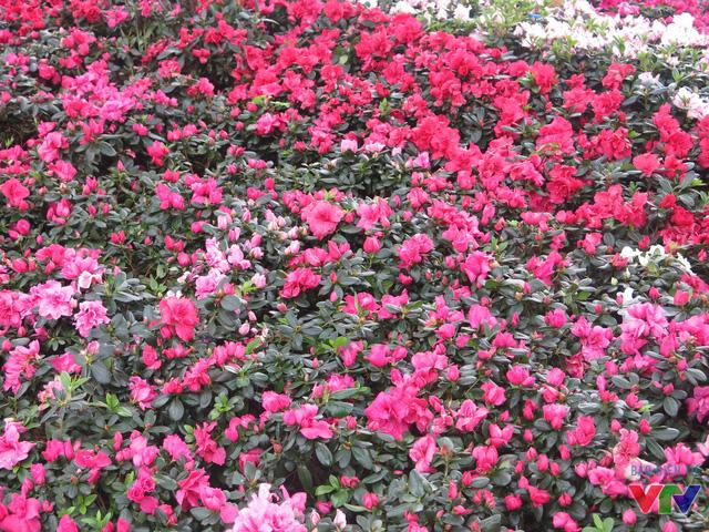 Nhiều loại hoa tươi rực rỡ phủ khắp các vườn bên hồ.
