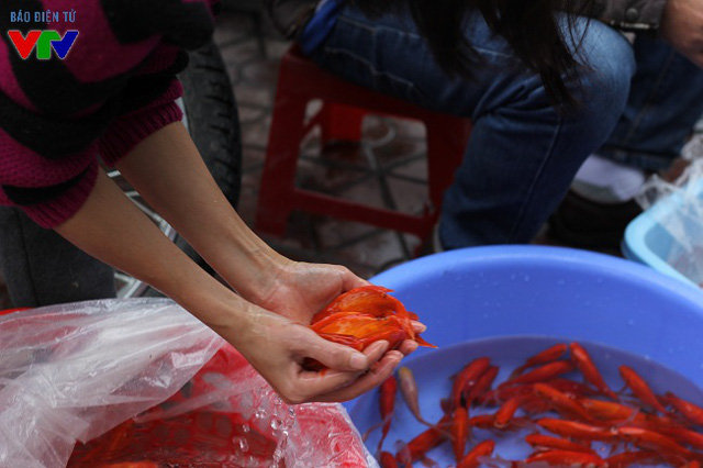 Các tiểu thương cho biết, loại cá chép nhỏ nhập tại chợ đầu mối có giá từ 70.000 đồng - 90.000 đồng/kg