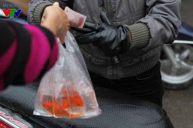 So với mọi năm, cá chép đỏ năm nay không có nhiều biến động về giá cả cũng như số lượng