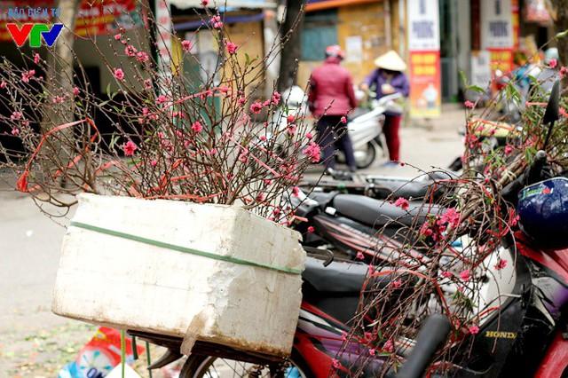Sau Tết Nguyên đán, nhiều hộ trồng đào Nhật Tân đã bày bán rất nhiều loại đào to, nhỏ nhằm phục vụ nhu cầu chơi hoa đến hết Rằm tháng Giêng của người dân.