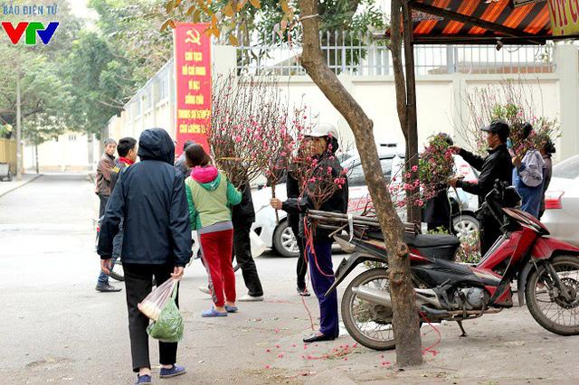 Tuy giá đào sau Tết khá thấp nhưng những người trồng đào Nhật Tân vẫn cố gắng cắt bán vì không muốn bỏ phí công sức chăm sóc đào ra hoa và thu lại vốn.