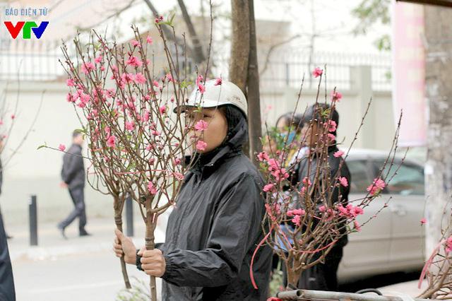 Ngay từ mùng 6 Tết Nguyên đán cho tới thời điểm hiện tại, vẫn có rất nhiều người bán đào Nhật Tân xuất hiện khắp phố phường Hà Nội để cố gắng bán hết số đào còn tồn đọng tại vườn.