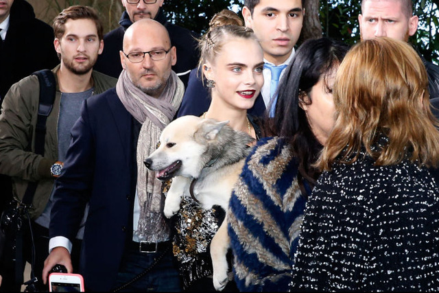 Cún cưng của Cara ngoan ngoãn trong vòng tay của chủ