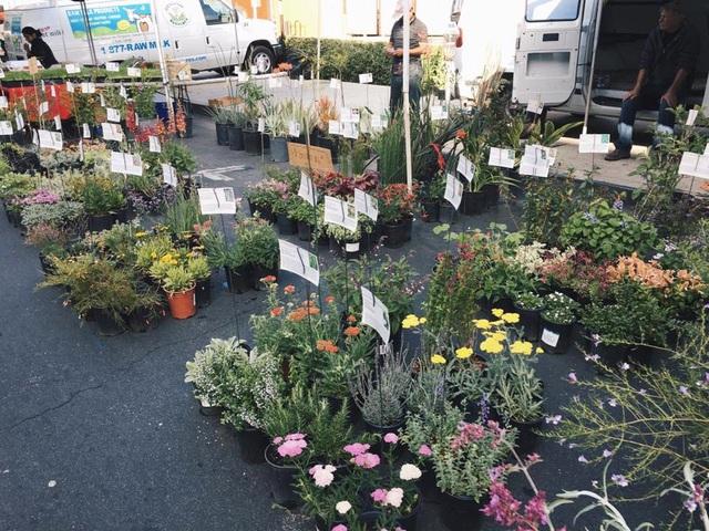 Ngoài ra, cô nàng cũng tranh thủ thời gian đi ngắm chợ phiên ở địa phương. Đặc biệt, những cửa hàng hoa được Mai Ngọc rất quan tâm.