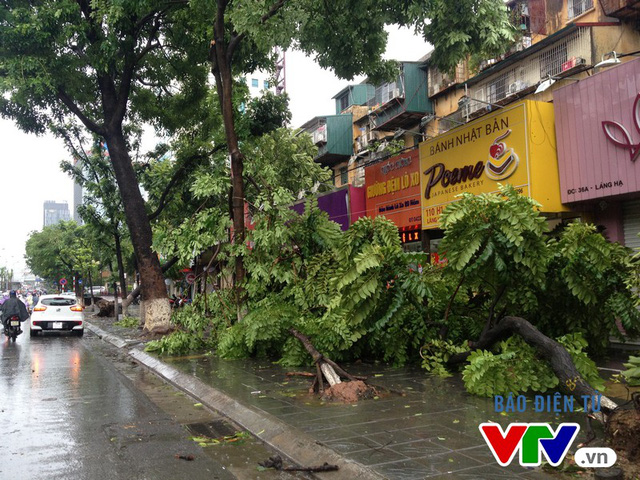 Hàng loạt cây xanh lớn nhỏ trên địa bàn Hà Nội đổ rạp.
