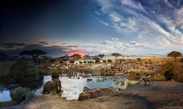 Vườn quốc gia Serengeti, Tanzania (Ảnh: Stephen Wilkes)