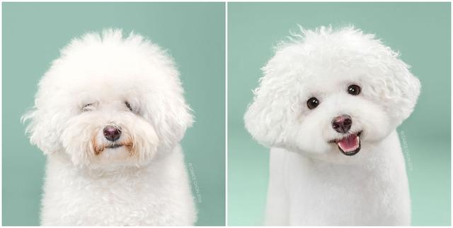 Chú chó Herman có vẻ hài lòng với cách sáng tạo mới của chủ nhân