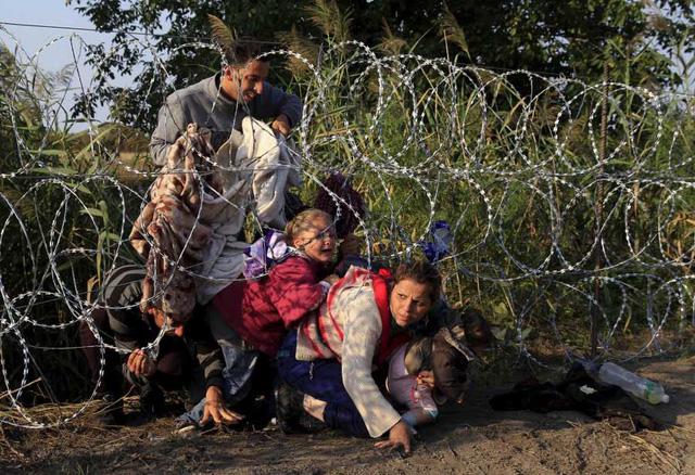 Những người di cư Syria chui qua một hàng rào dây thép gai để vào Hungary tại biên giới với Serbia, gần Roszke, hồi tháng 8/2015 (Ảnh: Reuters)