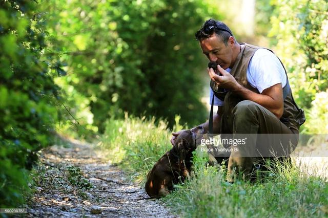 Những chú chó thính mũi là trợ thủ đắc lực trong việc săn lùng nấm cục truffle.