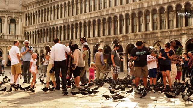 4. Venice: Không cho chim bồ câu trên phố ăn.