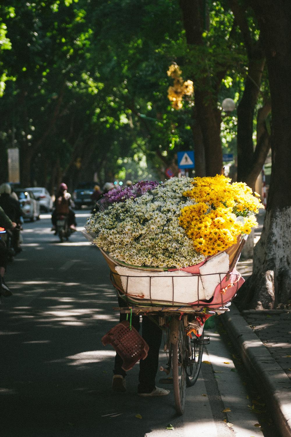 Cúc họa mi ngập tràn phố phường Hà Nội, giá tăng vì khan hàng - Ảnh 9.