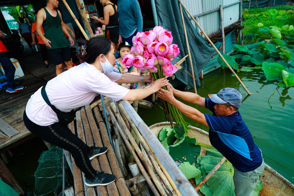 Sen Hồ Tây vào mùa, rực rỡ khoe sắc khắp phố phường Hà Nội  - Ảnh 10.