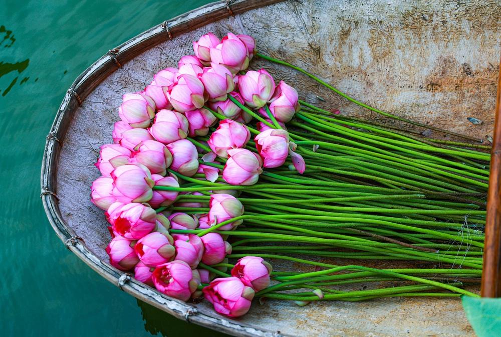 Sen Hồ Tây vào mùa, rực rỡ khoe sắc khắp phố phường Hà Nội  - Ảnh 9.