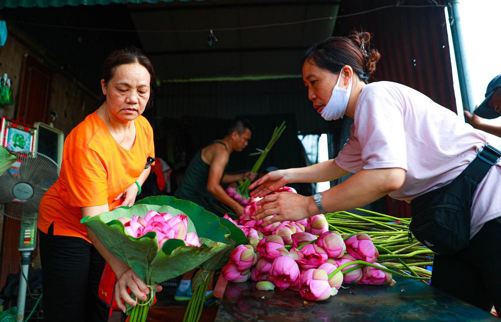 Sen Hồ Tây vào mùa, rực rỡ khoe sắc khắp phố phường Hà Nội  - Ảnh 13.