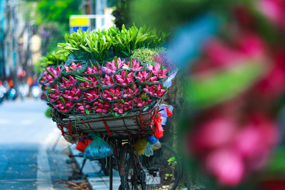 Sen Hồ Tây vào mùa, rực rỡ khoe sắc khắp phố phường Hà Nội  - Ảnh 18.