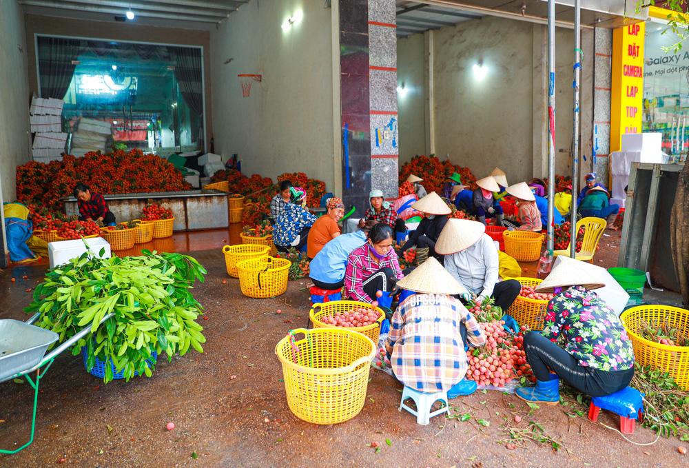 Lục Ngạn (Bắc Giang) mùa vải chín: Phiên chợ rực rỡ sắc đỏ - Ảnh 17.