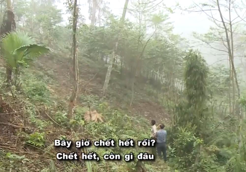 Hô biến rừng tự nhiên thành vàng chảy vào túi riêng: Em sai rồi, cho em được... trồng lại rừng! - Ảnh 5.