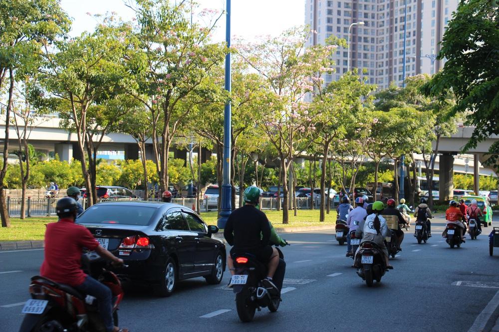 Đường phố TP Hồ Chí Minh thơ mộng trong sắc hoa kèn hồng rực rỡ - Ảnh 1.
