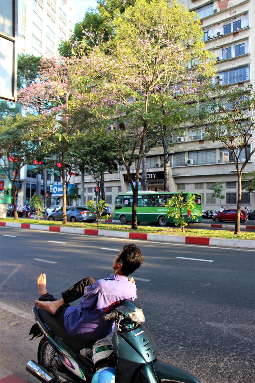 Đường phố TP Hồ Chí Minh thơ mộng trong sắc hoa kèn hồng rực rỡ - Ảnh 10.