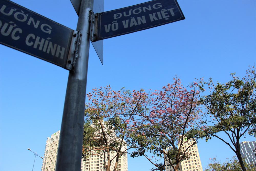 Đường phố TP Hồ Chí Minh thơ mộng trong sắc hoa kèn hồng rực rỡ - Ảnh 4.