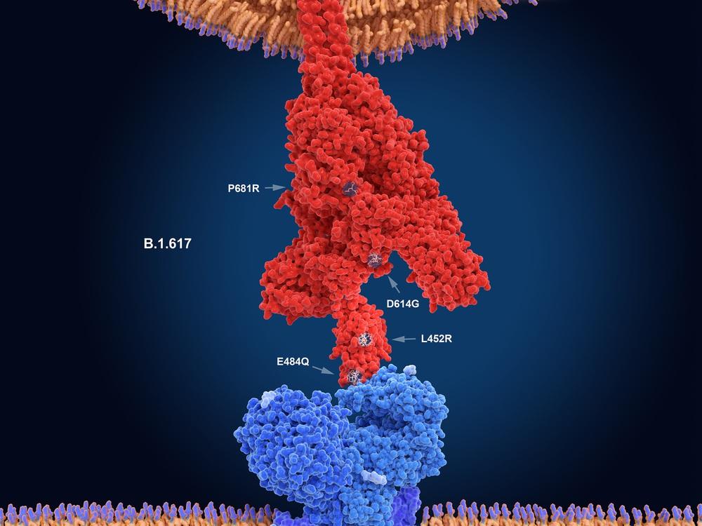 Người tiêm đủ vaccine và khả năng mắc COVID-19 - Ảnh 3.