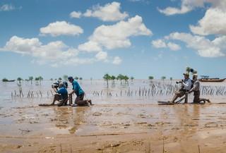 Theo chân ngư dân trồng bần