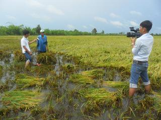 Sự nhọc nhằn của người trồng lúa