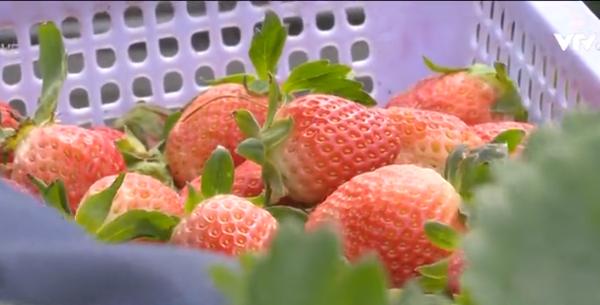 Thu hút người dân, DN đầu tư vào nông nghiệp công nghệ cao
