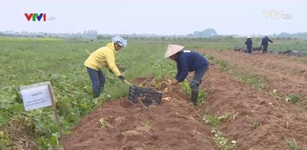 Tích tụ ruộng đất và bài toán mưu sinh nào cho người nông dân?