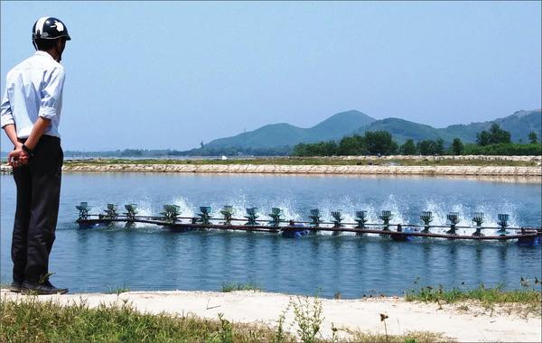Thời điểm này, hoạt động nuôi tôm chân trắng tại tỉnh Thừa Thiên Huế đã bắt đầu vào vụ chính với diện tích nuôi thả tôm đạt tỷ lệ rất cao. (Ảnh minh hoạ)