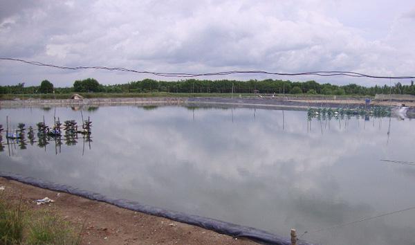 Bạc Liêu tăng cường bảo vệ môi trường nuôi tôm - ảnh 1
