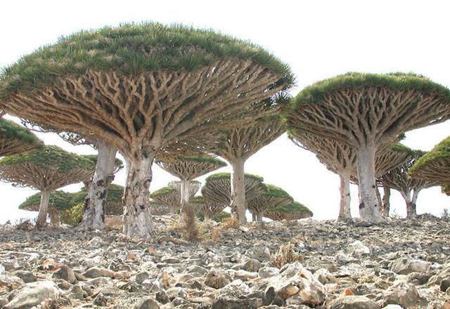 Khám phá Socotra - Hòn đảo được ví như hành tinh khác trên Trái đất - Ảnh 1.