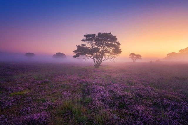 Đắm mình trong buổi sáng mùa Thu đẹp thần tiên ở Hà Lan - Ảnh 1.
