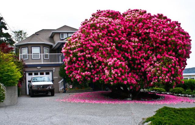 Ngỡ như lạc vào xứ thần tiên với những loài cây đẹp nhất hành tinh - Ảnh 1.