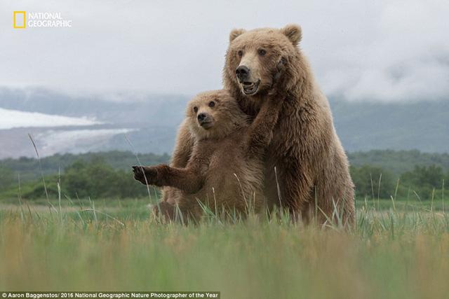 Thiên nhiên hoang dã đẹp mê hoặc trong ảnh của National Geographic - Ảnh 2.