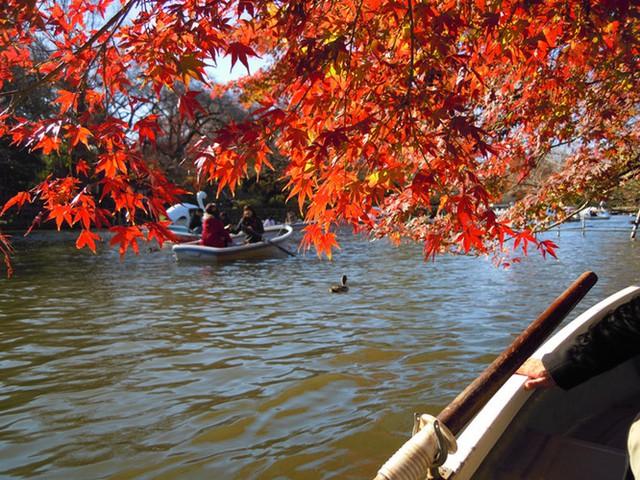Cảnh sắc mùa thu với lá vàng, lá đỏ đẹp như tranh vẽ ở Tokyo - Ảnh 1.