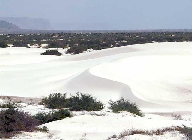 Khám phá Socotra - Hòn đảo được ví như hành tinh khác trên Trái đất - Ảnh 11.