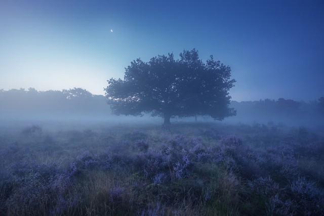 Đắm mình trong buổi sáng mùa Thu đẹp thần tiên ở Hà Lan - Ảnh 2.