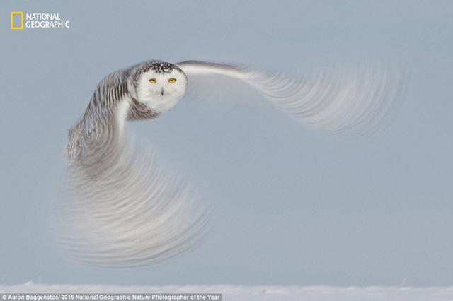 Thiên nhiên hoang dã đẹp mê hoặc trong ảnh của National Geographic - Ảnh 3.