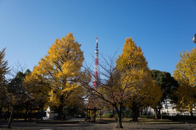 Cảnh sắc mùa thu với lá vàng, lá đỏ đẹp như tranh vẽ ở Tokyo - Ảnh 2.