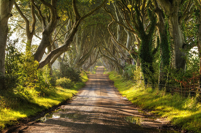 Ngỡ như lạc vào xứ thần tiên với những loài cây đẹp nhất hành tinh - Ảnh 11.