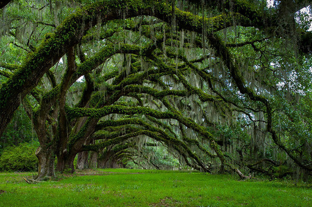 Ngỡ như lạc vào xứ thần tiên với những loài cây đẹp nhất hành tinh - Ảnh 12.