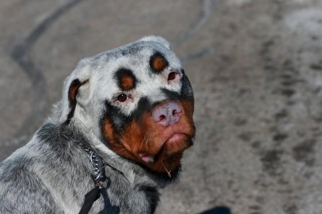 Ngắm những chú chó có bộ lông đặc biệt nhất thế giới - Ảnh 4.