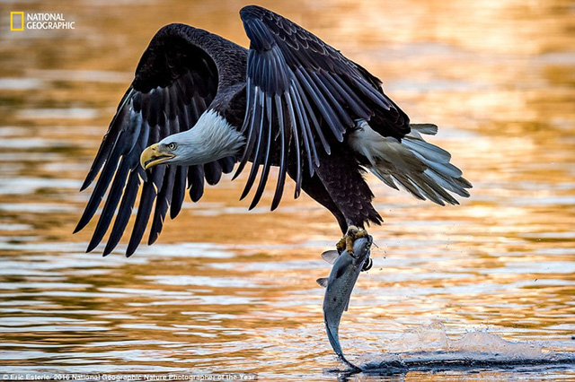 Thiên nhiên hoang dã đẹp mê hoặc trong ảnh của National Geographic - Ảnh 4.