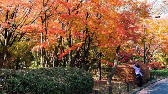 Cảnh sắc mùa thu với lá vàng, lá đỏ đẹp như tranh vẽ ở Tokyo - Ảnh 3.