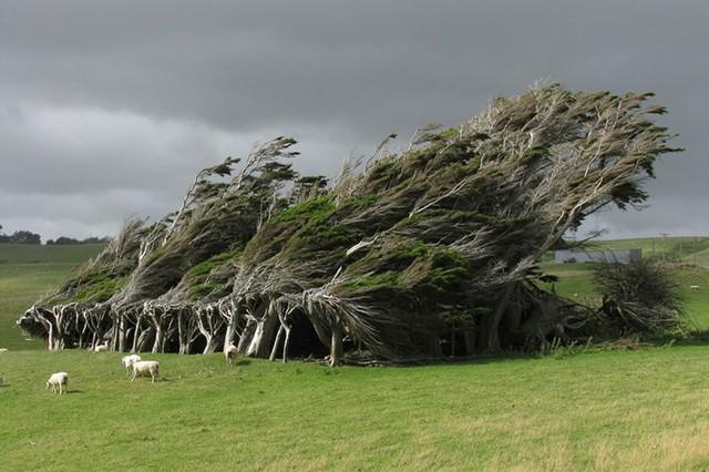 Ngỡ như lạc vào xứ thần tiên với những loài cây đẹp nhất hành tinh - Ảnh 13.