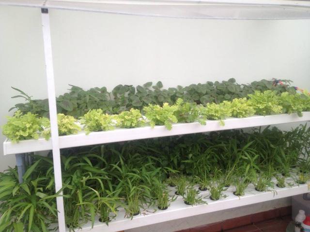 Xu hướng trồng rau thủy canh nhỏ gọn ngay tại nhà - Ảnh 1.