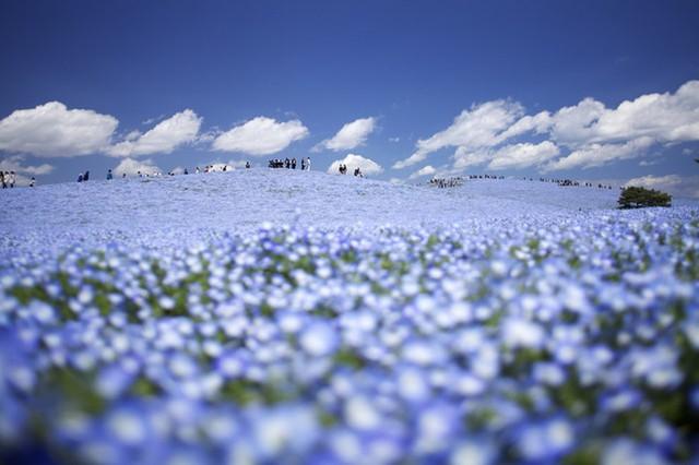 Ngất ngây với những điểm chụp ảnh đẹp nhất Nhật Bản - Ảnh 5.